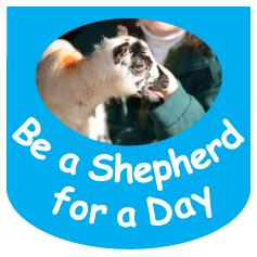 Be a Shepherd - adult or child