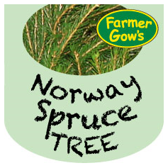 Norway Spruce ~ 1.75-2 m (6')