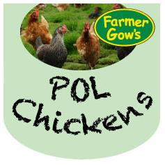 'Point of Lay' Chickens